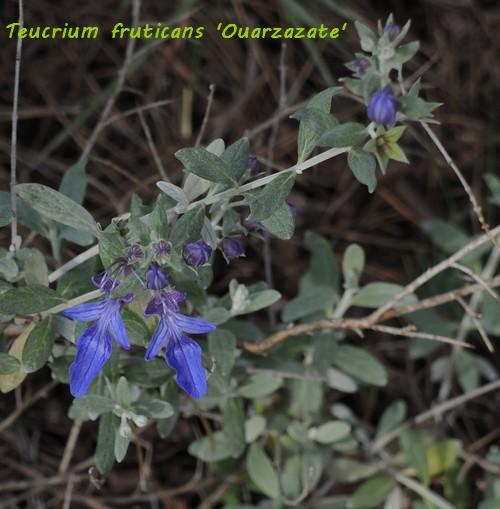 deux ou trois fleurs dans le vent - Page 2 Dscn6418