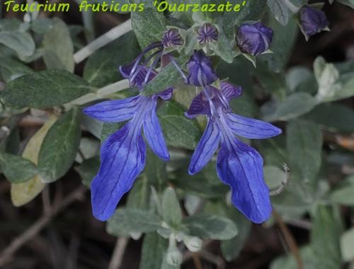 deux ou trois fleurs dans le vent - Page 2 Dscn6419