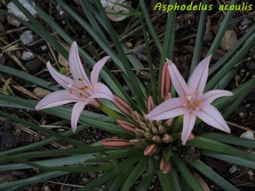deux ou trois fleurs dans le vent - Page 2 Dscn6422