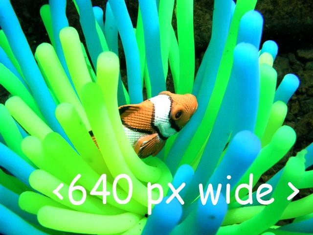 A few dive pics!!!!  750_6410
