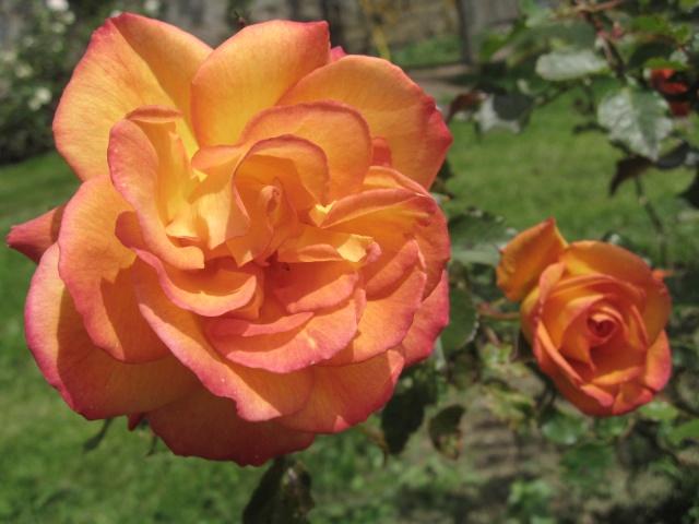 mon extérieur fleuris de mon chez moi lol 1_12310