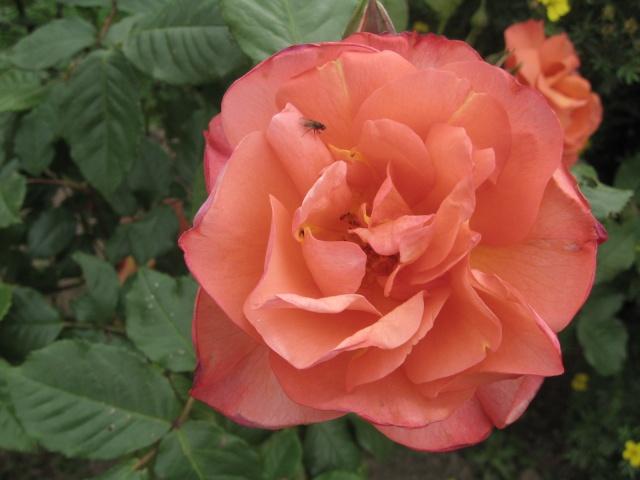 mon extérieur fleuris de mon chez moi lol 1_3310