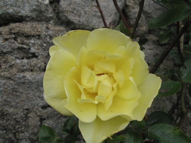 mon extérieur fleuris de mon chez moi lol 1_3710