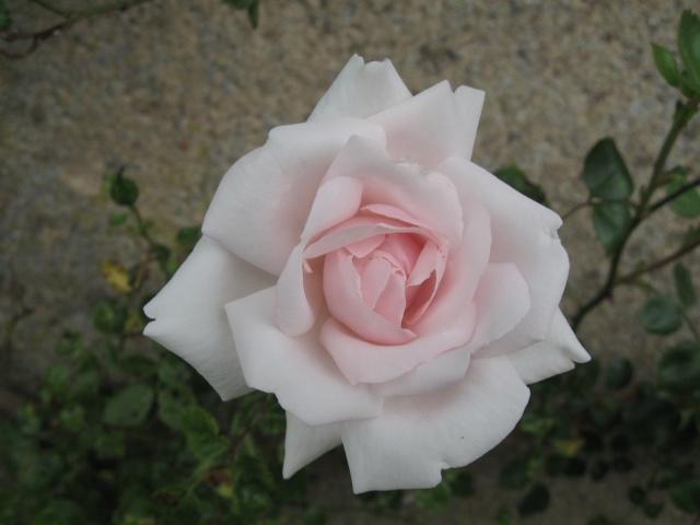 mon extérieur fleuris de mon chez moi lol 1_3810
