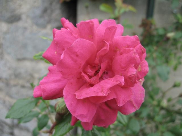 mon extérieur fleuris de mon chez moi lol 1_4610