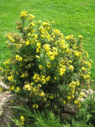 fleurs de marc et mario - Page 8 Img_0018
