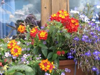 fleurs de marc et mario - Page 8 Img_0021