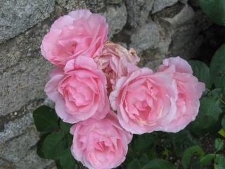 fleurs de marc et mario - Page 8 Img_0022