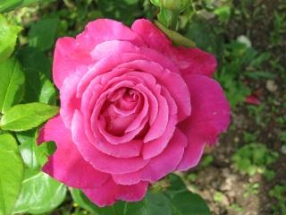 fleurs de marc et mario - Page 8 Img_0023