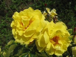 fleurs de marc et mario - Page 8 Img_0024