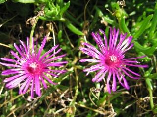 fleurs de marc et mario - Page 8 Img_0025