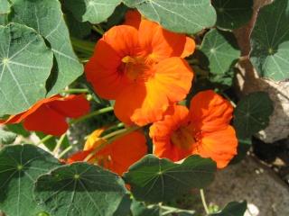 fleurs de marc et mario - Page 8 Img_0028