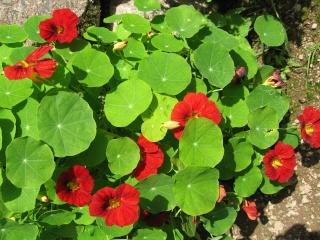fleurs de marc et mario - Page 8 Img_0029