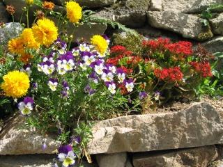 fleurs de marc et mario - Page 8 Img_0031