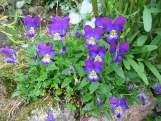 fleurs de marc et mario - Page 8 Img_0034