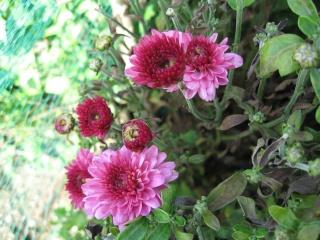 fleurs de marc et mario - Page 8 Img_0037