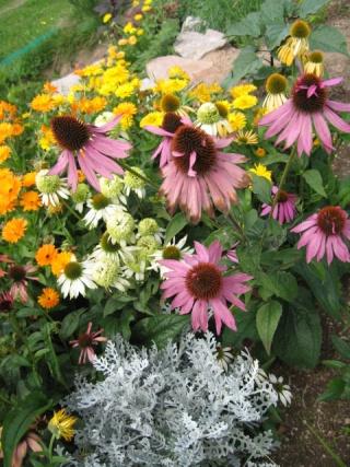 fleurs de marc et mario - Page 8 Img_0039