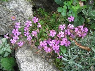 fleurs de marc et mario - Page 8 Img_0040