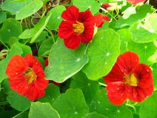 fleurs de marc et mario - Page 9 Img_0054