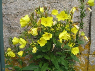 fleurs de marc et mario - Page 9 Img_0056