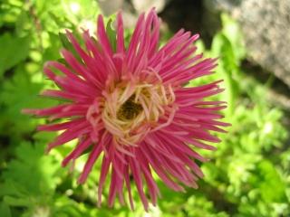 fleurs de marc et mario - Page 9 Img_0058