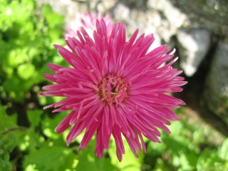 fleurs de marc et mario - Page 9 Img_0059