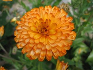 fleurs de marc et mario - Page 9 Img_0063