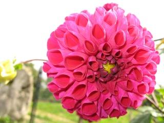 fleurs de marc et mario - Page 9 Img_0068