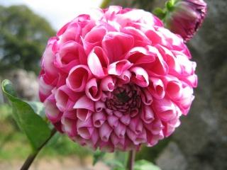 fleurs de marc et mario - Page 9 Img_0069