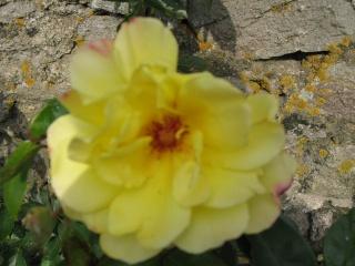 fleurs de marc et mario - Page 9 Img_0070