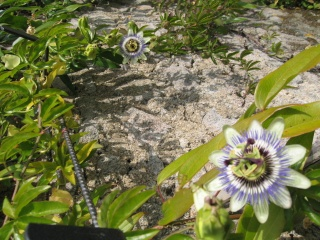 fleurs de marc et mario - Page 9 Img_0075