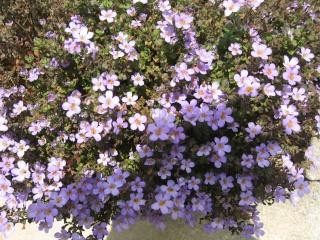 fleurs de marc et mario - Page 9 Img_0078