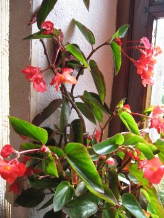 fleurs de marc et mario - Page 9 Img_0080