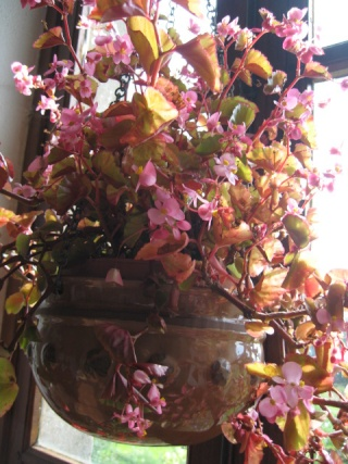 fleurs de marc et mario - Page 9 Img_0081