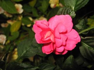 fleurs de marc et mario - Page 9 Img_0084