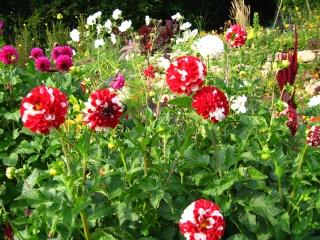 fleurs de marc et mario - Page 9 Img_0089