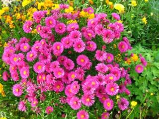 fleurs de marc et mario - Page 9 Img_0090