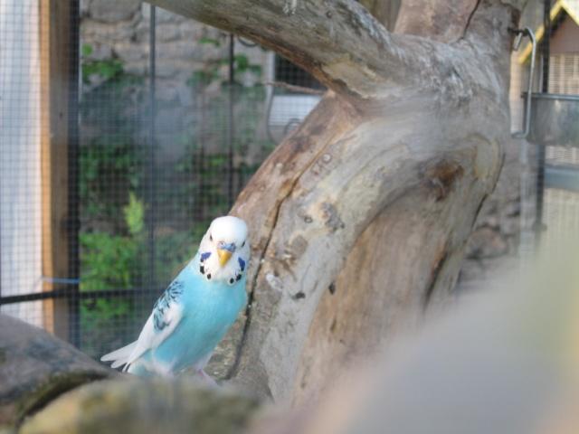 mes oiseaux exotique  Img_0191