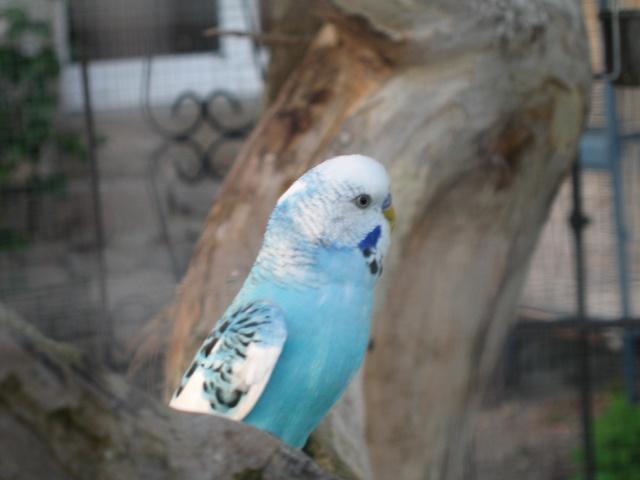 mes oiseaux exotique  Img_0192