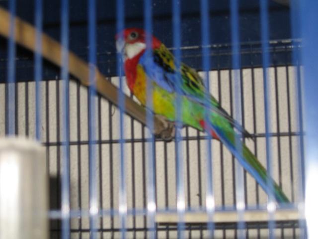 mes oiseaux exotique  Img_0193
