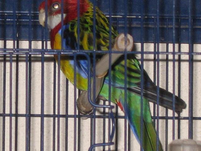 mes oiseaux exotique  Img_0194