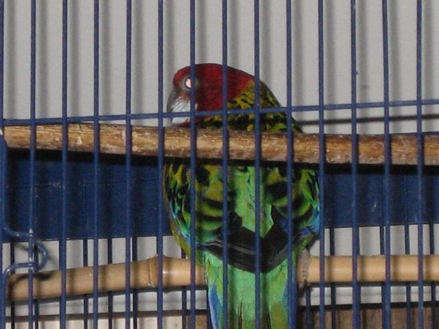 mes oiseaux exotique  Img_0195