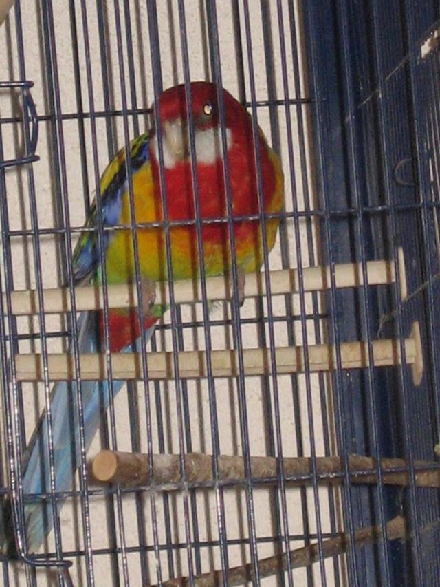 mes oiseaux exotique  Img_0196