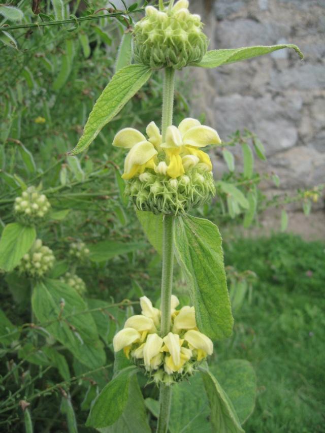 nouvelles floraisons  - Page 2 Img_0198