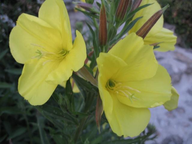 nouvelles floraisons  - Page 2 Img_0199