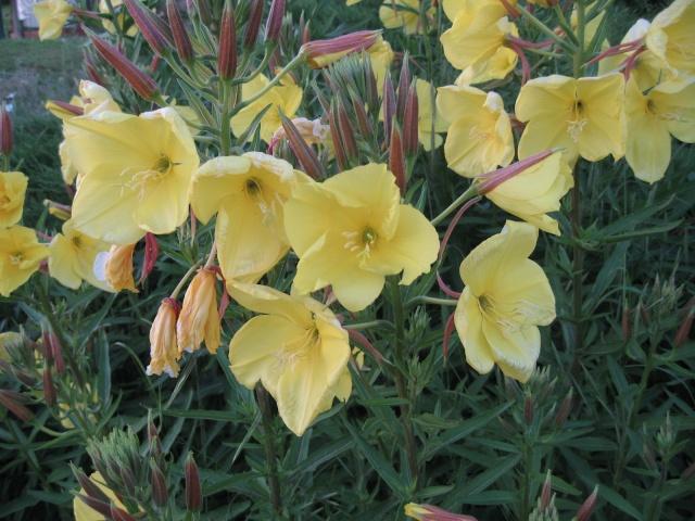 nouvelles floraisons  - Page 2 Img_0200