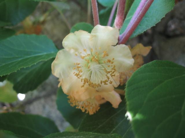 nouvelles floraisons  - Page 2 Img_0201