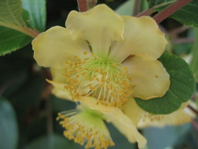 nouvelles floraisons  - Page 2 Img_0202