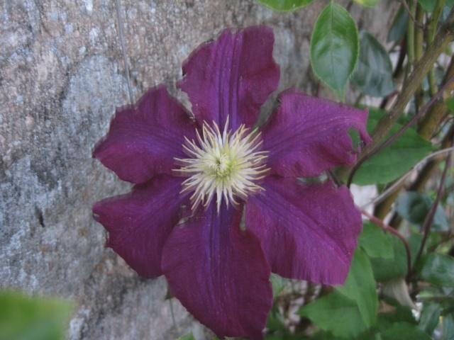 mon extérieur fleuris de mon chez moi lol Img_0206