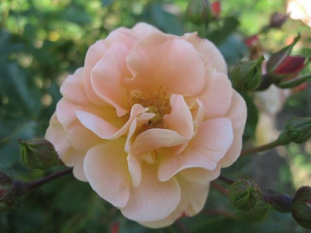 mon extérieur fleuris de mon chez moi lol Img_0208